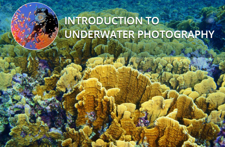 underwaterphotography Seeding Content Seeding Content Marketing clickbaiting